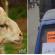 صورة تداولها نشطاء على الفايسبوك: يبيع سيارته من أجل شراء أضحية العيد