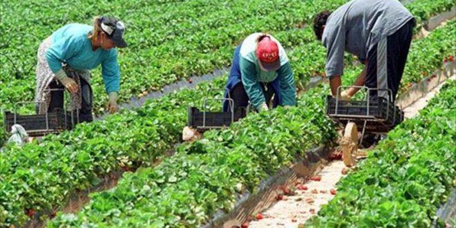 يوسف الشاهد : نحو تحسين ظروف نفاذ حوالي 500 ألف امرأة عاملة ريفيّة الى المنظومة الاجتماعيّة
