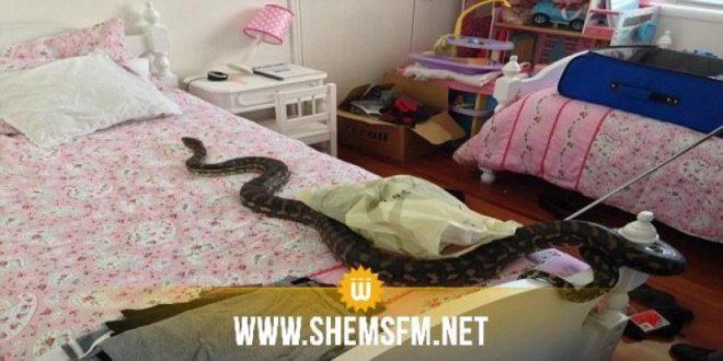 عقارب:عائلة تستنجد بالأمن للتخلص من ثعبان ضخم تسلل الى داخل المنزل