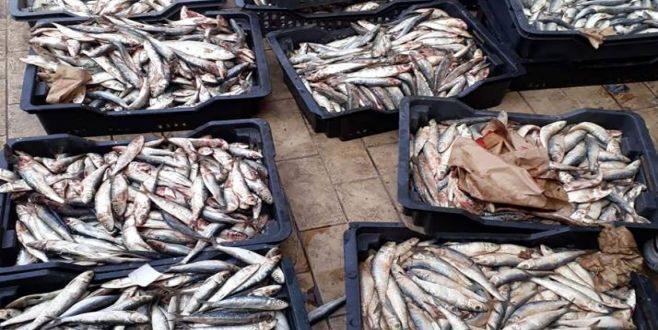 صفاقس: حجز واتلاف كمية هامة من الأسماك الغير صالحة للاستهلاك