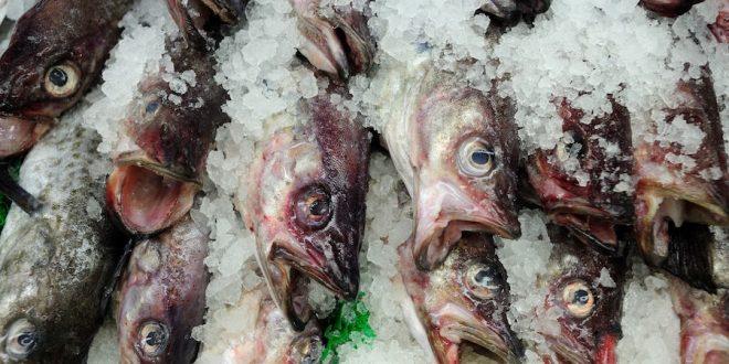 صفاقس: حجز 3 أطنان من الأسماك المُجمّدة وإيقاف صاحب مخزن