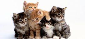 قطط جائعة تلتهم جسد صاحبها!