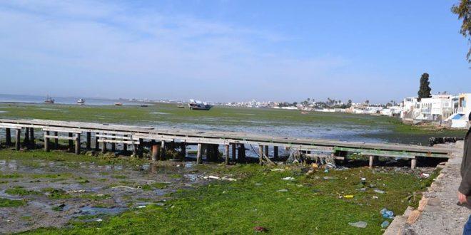 صفاقس:انطلاق عملية تنظيف شواطئ سيدي منصور