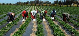 """صفاقس: انطلاق تنفيذ منظومة """"احميني"""" المتعلقة بالتغطية الاجتماعية للنساء العاملات في القطاع الفلاحي"""