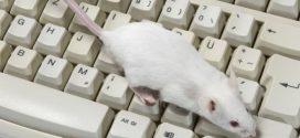 هل تكون الفئران سلاحا جديدا في محاربة الأخبار المزيفة؟
