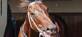 مهرجان الفروسية بعقارب: حصان هائج يخلّف عدد من المصابين