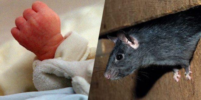 القصرين: فأر يتسبّب في وفاة رضيع الـ26 يومًا